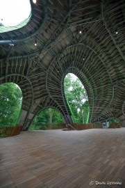 A look inside the organic structure