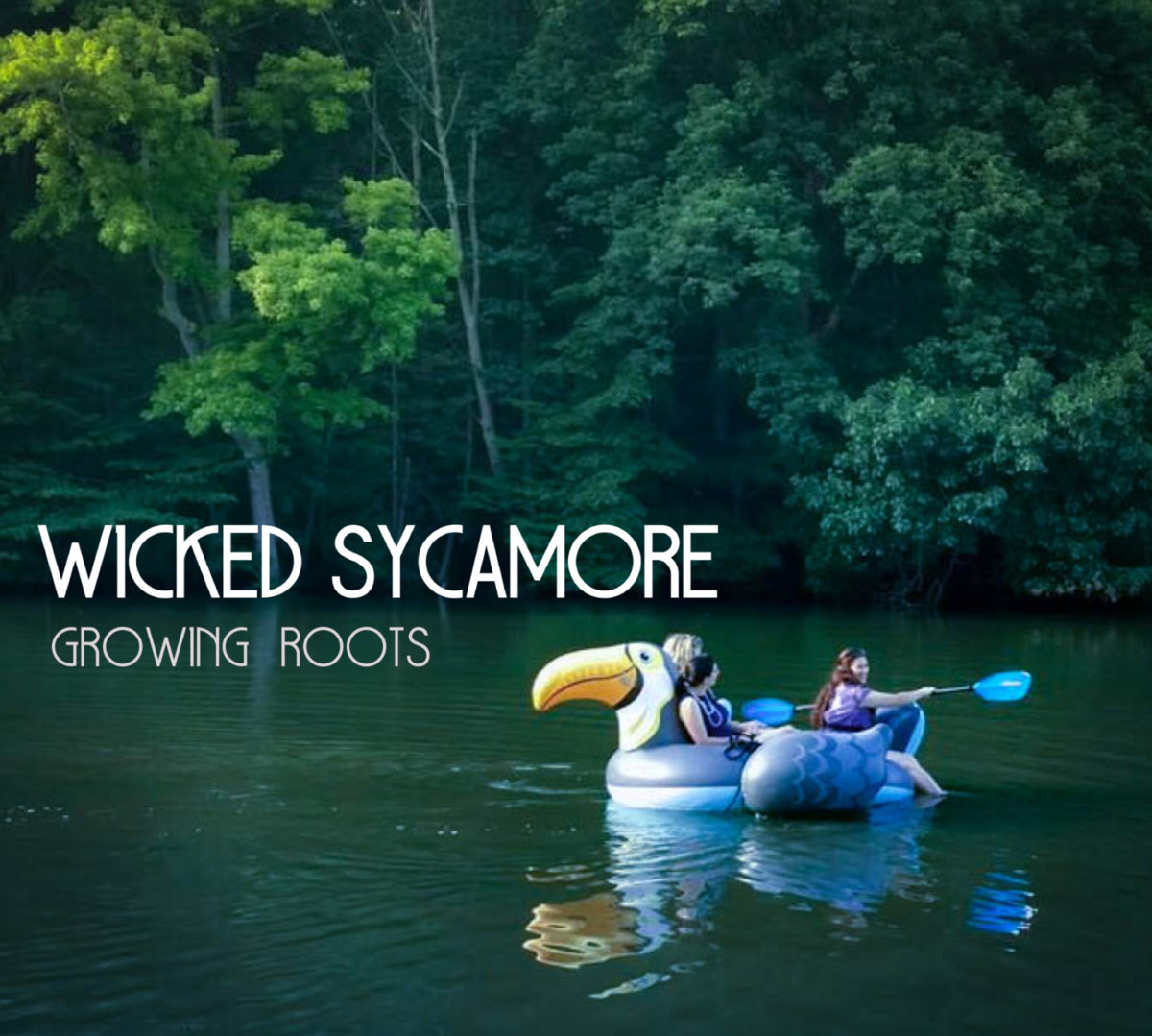 Wicked Sycamore - Growing Roots